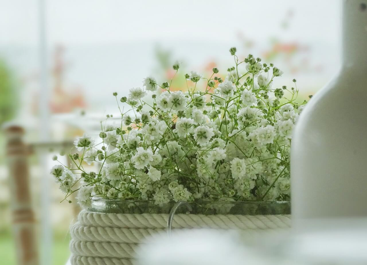 flowers-2850892_1280